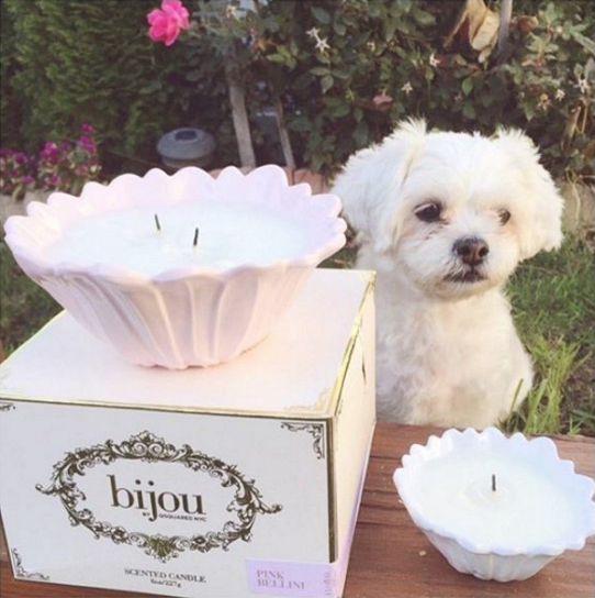 bijou candles and dogs